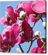 Landscape Pink Magnolia Flowers 46 Blue Sky Magnolia Tree Canvas Print