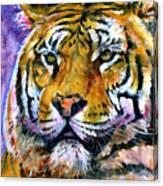 Landscape Tiger Canvas Print