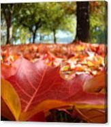 Landscape Trees Park Art Prints Autumn Fall Leaves Baslee Troutman Canvas Print