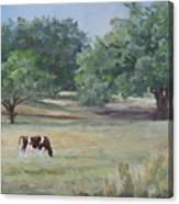 Landscape With Longhorn Canvas Print