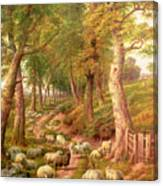 Landscape With Sheep Canvas Print