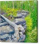 Lane Cove Burnt Stump Canvas Print