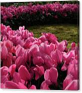 Lane Of Pink Canvas Print
