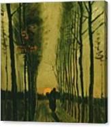 Lane Of Poplars At Sunset Canvas Print