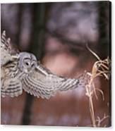 L'ange De La Mort Canvas Print
