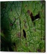 Languid Leaf Canvas Print
