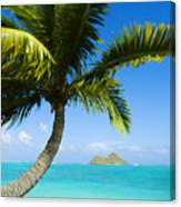 Lanikai Palm Canvas Print