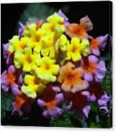 Lantana Flower Chips Canvas Print
