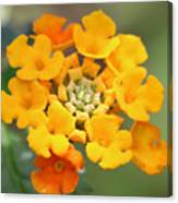 Lantana Flower Canvas Print