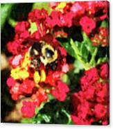 Lantanas And The Bee Canvas Print