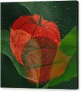 Lantern Flower Canvas Print