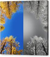 Larches Color To Black And White Reflection Canvas Print