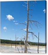 Large Dead Standing Tree In Hot Springs  Canvas Print