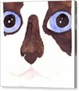 Large Eyed Cat OSWOA Canvas Print