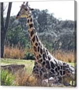 Large Giraffe Canvas Print