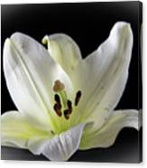 Large Lily-1 Canvas Print