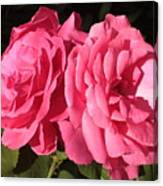 Large Pink Roses Canvas Print