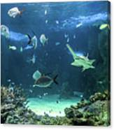 Large Sawfish And Other Fishes Swimming In A Large Aquarium Canvas Print