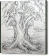 Large Shady Tree Canvas Print