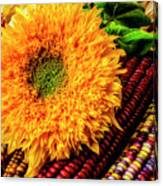Large Sunflower On Indian Corn Canvas Print