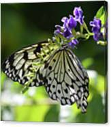 Large Tree Nymph Polinating Dainty Purple Flowers Canvas Print