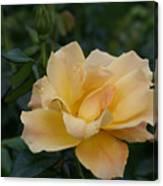 Large Yellow Rose II Canvas Print