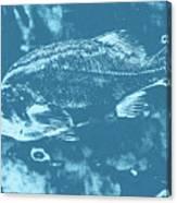 Largemouth Bass 8 Canvas Print