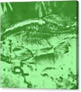 Largemouth Bass 9 Canvas Print