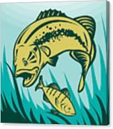 Largemouth Bass Preying On Perch Fish Canvas Print