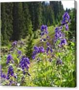 Larkspur Along Trail Ridge Road Canvas Print
