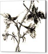 Larkspur  Canvas Print