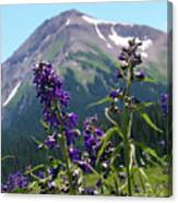 Larkspur Wildflowers Canvas Print