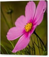Last Flower Canvas Print