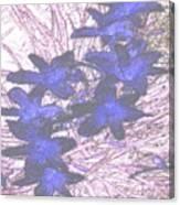Last Frozen Flowers Canvas Print
