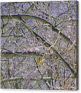 Last Leaf Of Winter Canvas Print