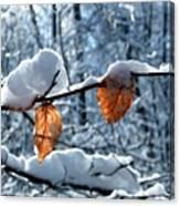 Last Leaves Canvas Print