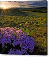 Last Light Of Spring Canvas Print