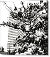 Last Snow Fall  Canvas Print