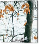 Last Snowy Leaves Canvas Print