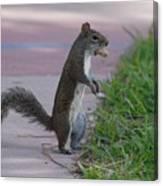 Last Squirrel Standing Canvas Print