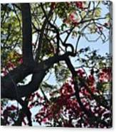 Late Afternoon Tree Silhouette With Bougainvilleas I Canvas Print