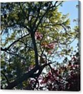 Late Afternoon Tree Silhouette With Bougainvileas II Canvas Print