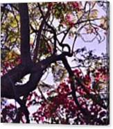 Late Afternoon Tree Silhouette With Bougainvilleas IIi Canvas Print