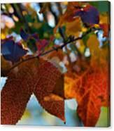 Late Autumn Colors Canvas Print