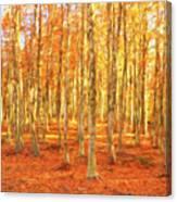 Late Autumn In Calabria Canvas Print