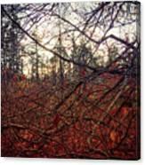Late Autumn Morning Canvas Print