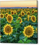 Late Bloomer Canvas Print