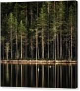 Late Loons Canvas Print