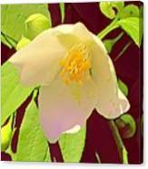 Late Spring Flower Canvas Print