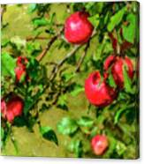 Late Summer Apples Canvas Print